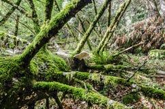 Деревянные грибы Стоковое Изображение