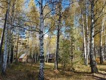 Деревянные дома в лесе осени Стоковая Фотография