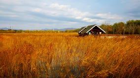 Деревянные дом и тростники, осень стоковое фото