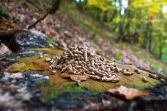 Деревянные лепешки стоковые фото