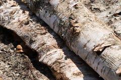 Деревянные естественные журналы отрезка стоковое фото