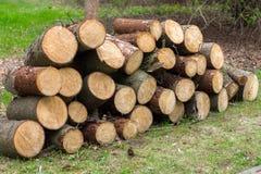 Деревянные журналы древесин сосны в лесе, штабелированные в куче стоковое изображение