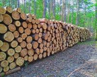 Деревянные журналы древесин сосны в лесе стоковое изображение rf