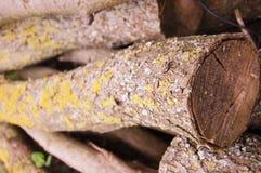 Деревянные журналы лежа одно на других стоковые фотографии rf