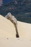 Деревянные загородки на дезертированных дюнах пляжа в Тарифе, Испании Стоковая Фотография RF