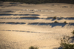 Деревянные загородки на дезертированных дюнах пляжа в Тарифе, Испании Стоковое фото RF