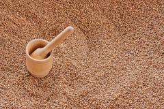 Деревянные зерна миномета и пшеницы Взгляд сверху, текстура зерен пшеницы стоковая фотография rf