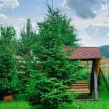 Деревянные качания на спортивной площадке в зеленом парке стоковое изображение rf