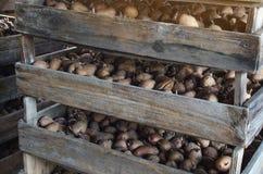 Деревянные коробки с картошками готовыми для засаживать в земле Начало засаживая сезона Агро-промышленный комплекс стоковое изображение rf