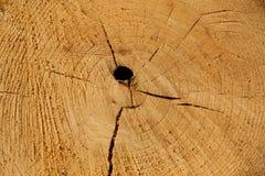 Деревянные кольца Стоковые Фотографии RF