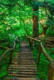 Деревянные лестницы водя вниз Стоковые Фото
