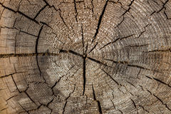 Деревянные обои текстуры стоковое изображение