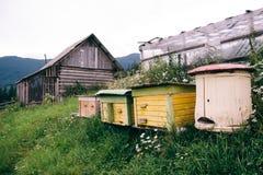 Деревянные дома для пчел Природа в горах Стоковое Изображение RF