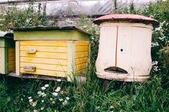Деревянные дома для пчел Природа в горах Стоковые Фотографии RF