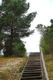 Деревянные пешеходные лестницы в парке стоковые изображения