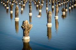 Деревянные поляки отражая в воде, озере соли Baskunchak Стоковое фото RF