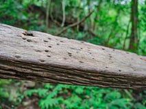 Деревянные поручни в пути к верхней части горы Khao Luang в национальном парке Ramkhamhaeng стоковые изображения rf