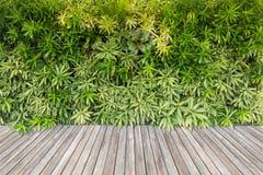 Деревянные пол и зеленые растения на предпосылке стены стоковая фотография rf