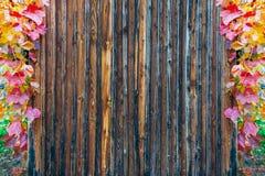 Деревянные предкрылки текстурируют обрамленный с осенними покрашенными листьями лозы стоковые фотографии rf