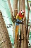 Деревянные птицы ары или попугая на дереве Стоковое Изображение RF