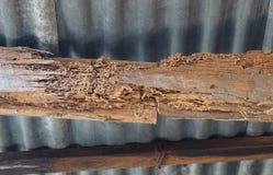 Деревянные структуры разрушенные термитами стоковые изображения