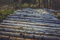 Деревянные след или тропа горного велосипеда Стоковое фото RF