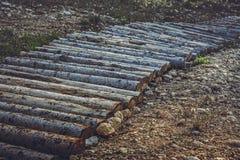Деревянные след или тропа горного велосипеда Стоковая Фотография RF