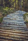Деревянные след или тропа горного велосипеда Стоковое Изображение