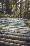 Деревянные след или тропа горного велосипеда Стоковая Фотография