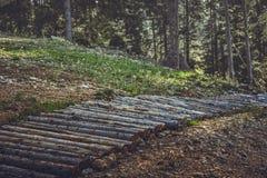 Деревянные след или тропа горного велосипеда Стоковое Фото