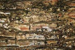 Деревянные текстура и предпосылка Стоковые Фото