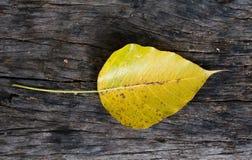 Деревянные текстура и предпосылка Стоковые Изображения