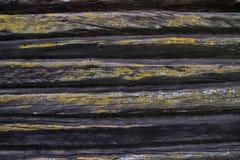 Деревянные текстуры, деревянная предпосылка панели, текстура деревянных доск Стоковая Фотография
