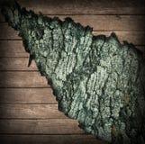Деревянные текстуры Стоковая Фотография