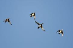 Деревянные утки летая в голубое небо Стоковое Изображение