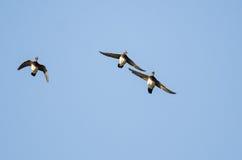 Деревянные утки летая в голубое небо Стоковая Фотография RF