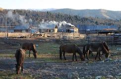 Деревянные хаты с лошадями Стоковые Изображения
