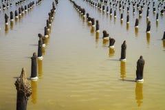 Деревянные штендеры на соляном baskunchak озера соли стоковые фото