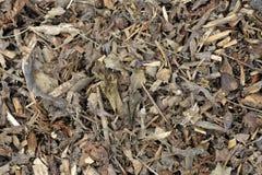 Деревянные щепки Стоковое Изображение RF