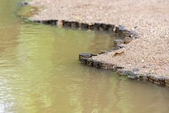 Деревянные stubs гребут на речном береге - реке границы обваловки Стоковые Изображения