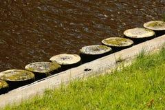 Деревянные stubs как обваловка реки Стоковые Фото