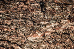 Деревянный абстрактный состав Стоковое Фото