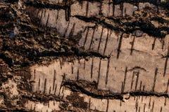 Деревянный абстрактный состав Стоковое Изображение