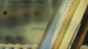 Деревянный будучи покрашенным паллет белым с всасывателем в мастерской акции видеоматериалы