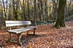 Деревянный взгляд стенда в парке осени Стоковые Фото