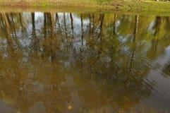 Деревянный взгляд зеркала воды наклона Лето жара greenery Трава Стоковое Изображение RF