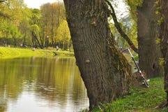Деревянный взгляд зеркала воды наклона Лето жара greenery Трава Стоковые Изображения RF