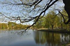 Деревянный взгляд зеркала воды наклона Лето жара greenery Трава Стоковые Фотографии RF