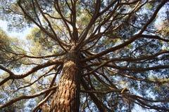 Деревянный восьминог Стоковые Фотографии RF