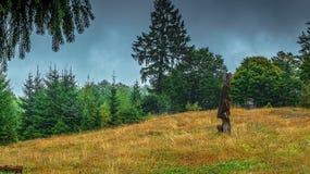 Деревянный высекать Стоковые Изображения RF